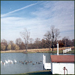 - Lake, looking North with pumphouse, dock and domestic geese and 